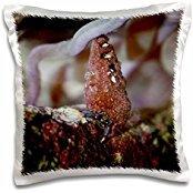 Susans Zoo Crew Animals - hermit crab blue saltwater - 16x16 inch Pillow Case