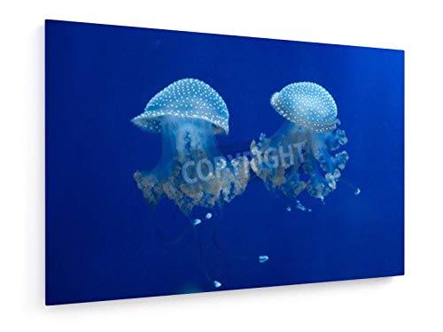 Paarungstanz - 30x20 cm - Leinwandbild auf Keilrahmen - Wand-Bild - Kunst, Gemälde, Foto, Bild auf Leinwand - Tiere -