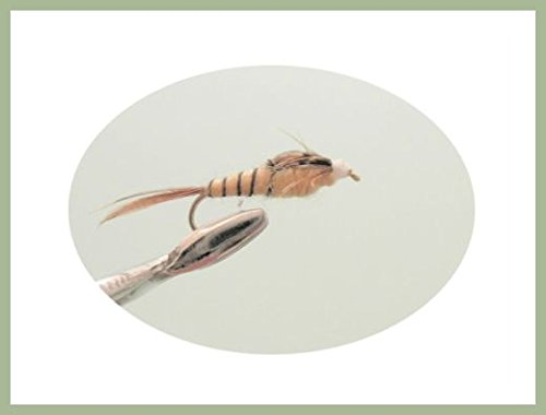 Lot de 12Tan Manne Longshank Pêche à la mouche Nymphe Flies. Tailles mélangées 14/16