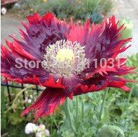 100pcs / pack.Flower pentole fioriere Strelitzia reginae