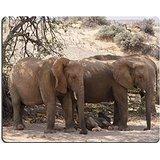 luxlady-alfombrilla-para-raton-una-familia-de-desierto-elefantes-relaja-en-la-sombra-de-un-arbol-de-