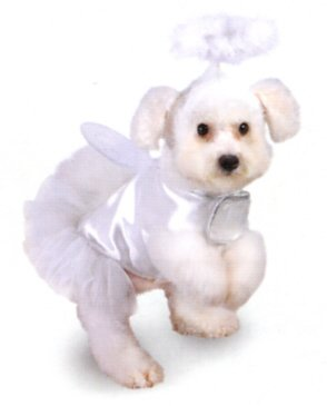 Dog Fancy Dress Costume. Angel in white with wings. Size 10