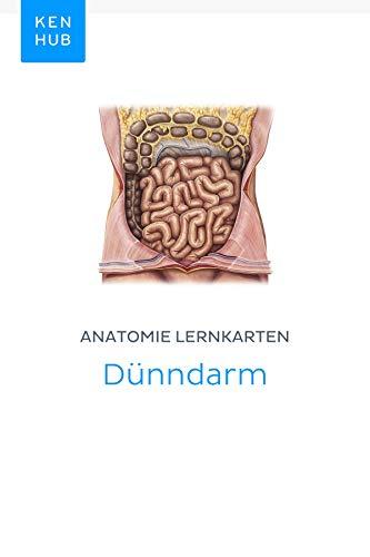 Anatomie Lernkarten: Dünndarm: Lerne alle Organe, Arterien, Venen ...