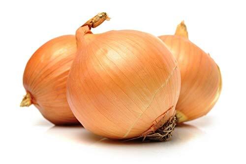 """PLAT FIRM GERMINATIONSAMEN: Zwiebel""""Exhibition"""" - süße und große Vielfalt, Zwiebeln bis zu - 250 Samen"""