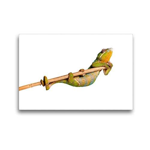 Calvendo Premium Textil-Leinwand 45 cm x 30 cm quer, Pantherchamäleon | Wandbild, Bild auf Keilrahmen, Fertigbild auf echter Leinwand, Leinwanddruck: Turnen Tiere Tiere