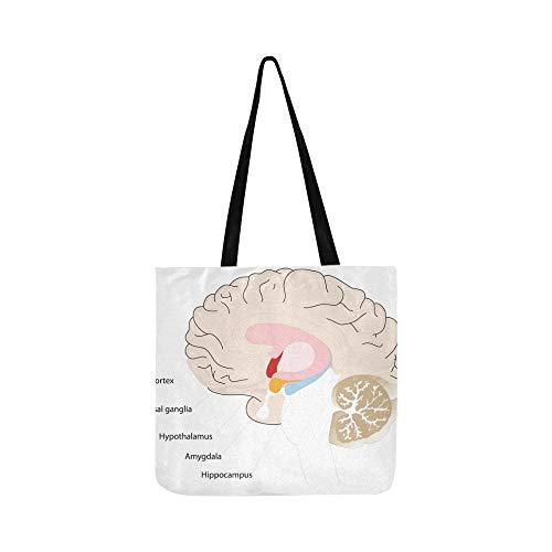 Gehirn Querschnitt Basal Ganglia Canvas Tote Handtasche Schultertasche Crossbody Taschen Geldbörsen Für Männer Und Frauen Einkaufstasche