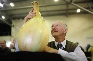 NOUVELLES 50 GRAINES - Graines d'oignon géant. AILSA CRAIG écossais Heirloom une énorme graine onion.Vegetable.