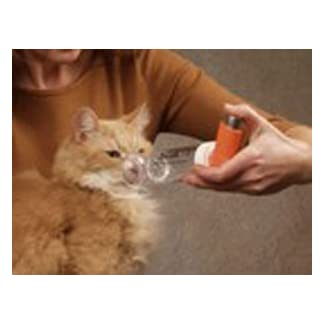 aerokat feline inhalation chamber Aerokat Feline Inhalation Chamber 31sQK39jFJL
