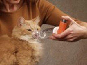 AeroKat Inhalationsgerät für Katzen