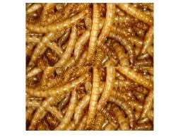 5kg-Dried-Mealworms