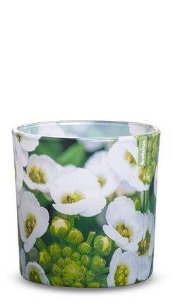 Duftglas Floral Garden 100/100 mm (4 Stück) - Löffelkresse