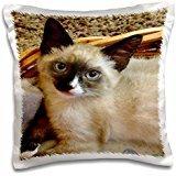 Florene - Cat Art - Print of Siamese Cat Painting - 16x16 inch Pillow Case