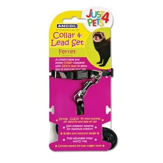 Ancol Just 4 Pets Ferret Collar and Lead Set 31sujM0CwiL