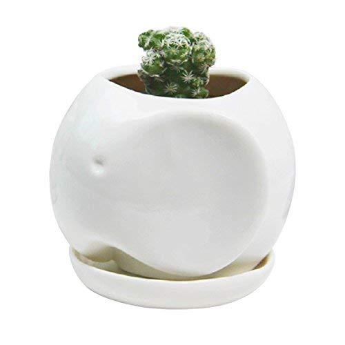 Creme Weiß Klein Tier Cub Katze Sukkulente Pflanztopf/Blumentopf/Miniatur Pflanzkübel Blumentöpfe mit Tablett,