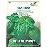 #9: Basil Seeds Italian Foglia di lattuga (5 grams - appx 2500 seeds (Non GMO - Non Hybrid seeds)