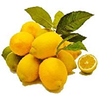 Zitronen (1 Stück) - Bio