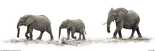 Pyramid International–Póster de Mario Moreno (la Elefantes) Slim Póster, Papel, 30x 91,5x...