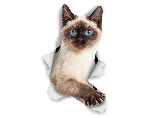 Winston & Bear 3D Katze Aufkleber - 2er-Pack - Breakout siamesische Katze Aufkleber für Wand, Kühlschrank siamesische Katze Aufkleber