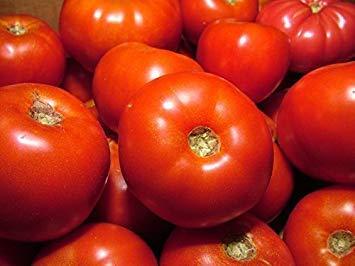 FERRY Keim Seeds: Rutgers Bulk-Tomate Seeds * Solide * 100 Samen pro Pkt