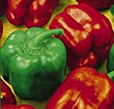 Sweet Bell Pepper - Californian Wonder - 40 seeds