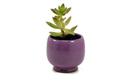 Star Gardens Handi Purple Ceramic Pots for Indoor & Outdoor Plants, Planters for Table top or Office Desk Table, Succulent Pots, Balcony & Decoration Ceramic Pot, Ceramic Pot Without Plant SG-CER-007
