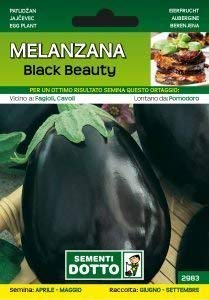 Semi di Melanzana Black Beauty 1,9 grammi
