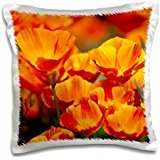 Terry Eggers - USA, Washington, Seattle, California Poppies in Bloom - 16x16 inch Pillow Case