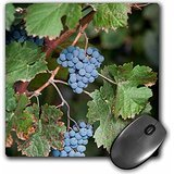 danita-delimont-grapes-china-ningxia-merlot-grapes-hang-on-the-vine-helan-mountain-winery-mousepad-m
