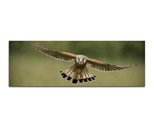 Preisvergleich Produktbild Panoramabild auf Leinwand und Keilrahmen 150x50cm Falke Vogel Flug Holzpfahl
