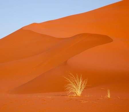 Feelingathome-STAMPA-ARTISTICA_x_cornice-Namibia,-Namib-Naukluft-Park-Erba-e-duna-di-sabbia-cm43x51-arredo-POSTER-fineart