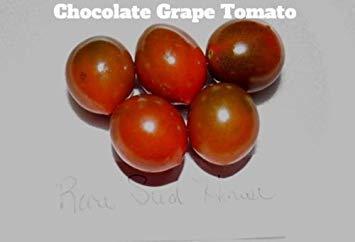 GEOPONICS Schokoladen-Tomate sät! Toller Geschmack! Kamm. S / H Sehen Sie unseren Speicher!