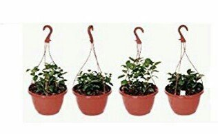 Hanging Pot /Planters, Brown colour (4 Qty)-Srisai Naturals