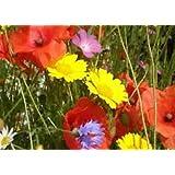 Cornfield annual standard native UK wildflower MeadowMania seed mix 100 grams