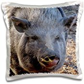 Nature N Wildlife animals - Pot Belly Pig - 16x16 inch Pillow Case