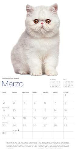 Zoom IMG-3 gatti calendario 2020 da muro