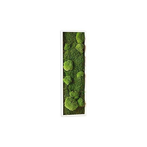 Tableau végétal mousse stabilisé BASIC - Pano 20x70 - NATURALYS verifier le produit à la livraison