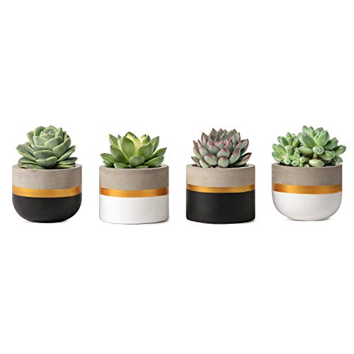 Mkouo 7.6cm Zement Succulent Pflanzen Modern Concrete Kaktus Blumentöpfe Small Clay Innen Herb Window Box Container for Home and Office Decor, Set of 4