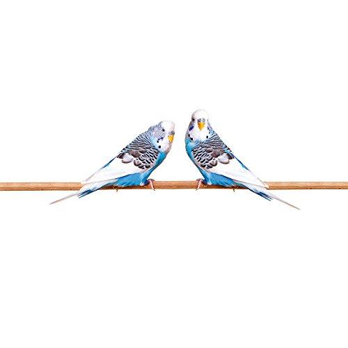 Apple iPhone 5s Housse Étui Protection Coque Oiseau Perruche Perruche ondulée Étui en cuir bleu marine
