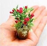 Neue Produkte 100pcs 4 Sorten gemischten Rosen Samen Seltene Bonsai Mini-Regenbogen-Blumensamen Schöne Anlage für DIY Hausgarten