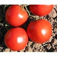 PLAT FIRM Germination Les graines PLATFIRM-400 Graines bio, Heirloom Double Rich tomate Graines de nouvelles semences pour 2017