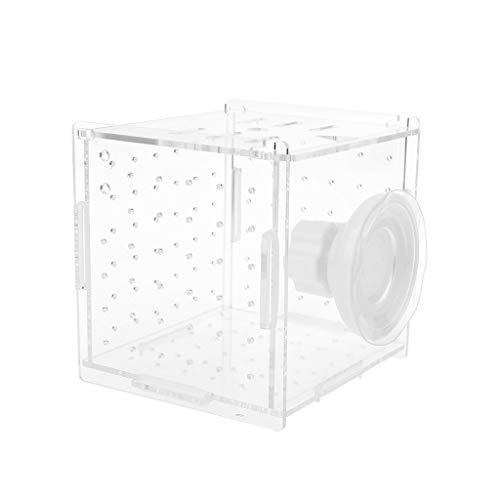 JunYe Aquarium Zucht Isolation Box für Baby Fish Hatchery Inkubator Käfig mit Saugnapf Haken - Rundes Loch mit Saugnapf