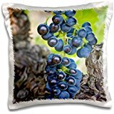 Vineyards - USA, WA, Yakima Valley, Syrah Grape vineyard 16x16 inch Pillow Case
