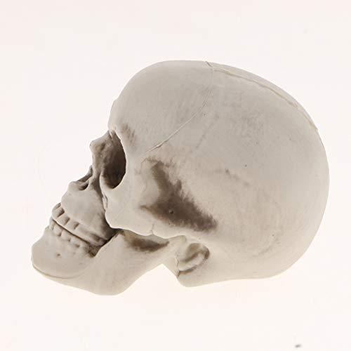 PETSOLA Schädel Kopf Kleine Figur Halloween Dekoration Statue Skelett Figur - E