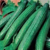 Cucumber Bali F1 seeds