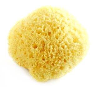 Nid d'abeille naturelle éponge de mer 9 à 9 1/5,1 cm Longueur