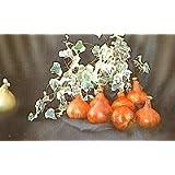 Verdure da Esibizione - Robinsons Mammuth Rosso Cipolla - 100 Semi