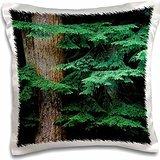 Oregon - USA, Oregon, Corvallis. New Douglas fir growth 16x16 inch Pillow Case (Case Douglas Les Paul)