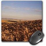 danita-delimont-farms-wheat-farm-palouse-washington-state-usa-us48-swe0137-stuart-westmorland-mousep