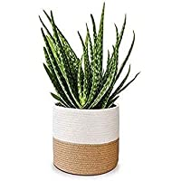 DICE WORLD Jute Planter Pots/Storage Basket with Handle, Multi-Purpose use for Bathroom Living Room ALL SIZES (BEIGE…