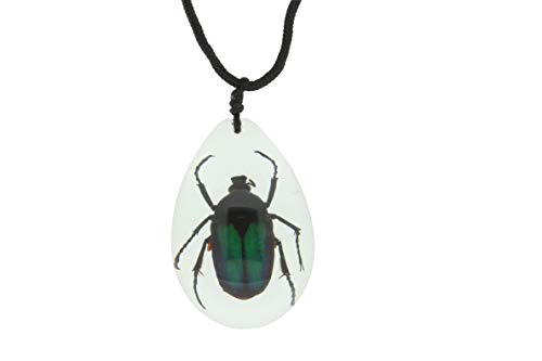 The Bug Store Halskette mit Insekten-Anhänger Käfer
